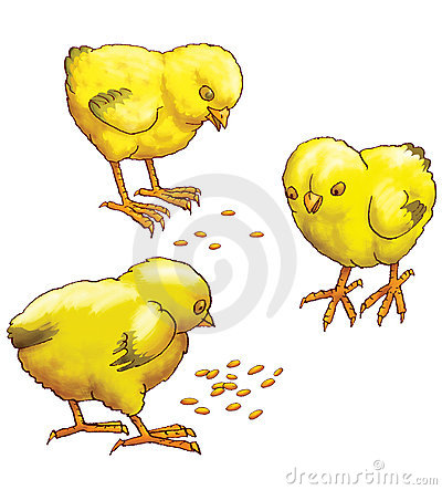 Three yellow chickens