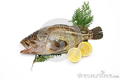 Threestripe rockfish