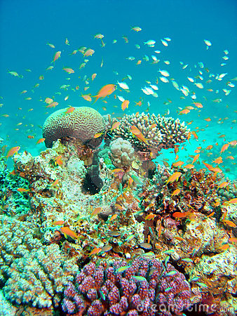 Thriving coral reef