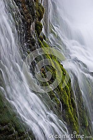 Thunder River Moss