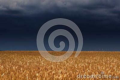 Thunder sky above field