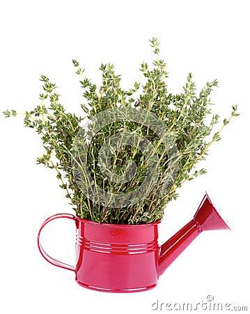 Free Thyme Stock Image - 35915171