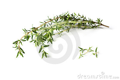 Thyme branch and leaves