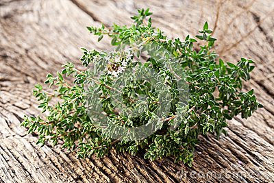 Thyme herb.