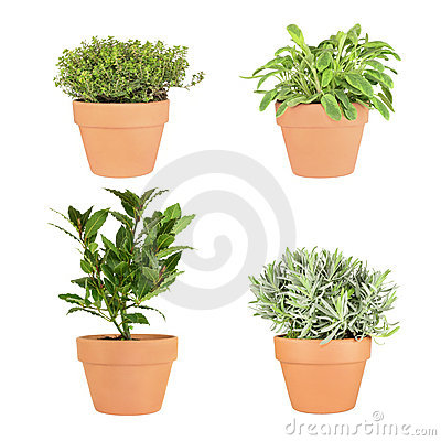 Thyme, Sage, Bay and Lavender Herbs