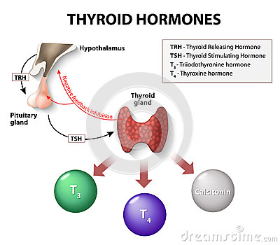 Thyroid Disease Symptoms and Action Plan forecasting