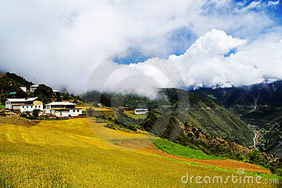 Tibetan cottage in barley field