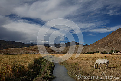 Tibetan  countryside