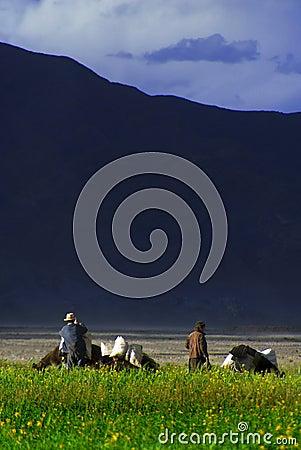 Free Tibetan Farmers In Field Stock Photos - 4361603