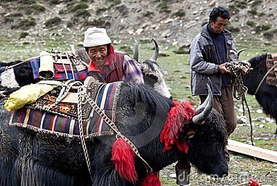 Tibetan nomads Editorial Stock Image