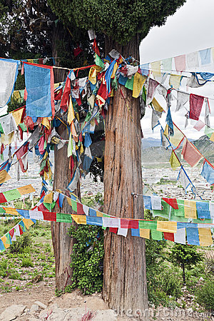 Tibetan Prayer Flags on Cedar Tree