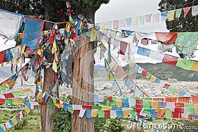 Tibetan Prayer Flags on Cedar Tree