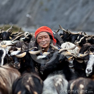 Tibetan woman with goats from Dolpo, Nepal Editorial Photo