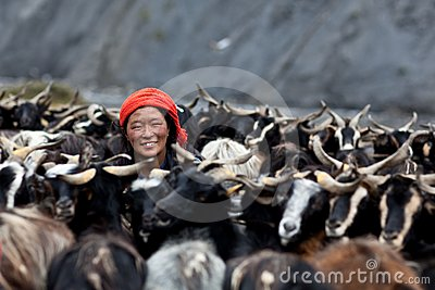 Tibetan woman with goats from Dolpo, Nepal Editorial Photography