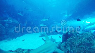Tiburón metrajes