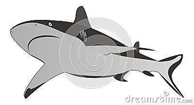 Tiburón - depredador peligroso del mar, ilustración