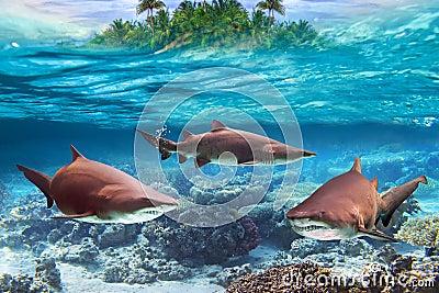 Tiburones de toro peligrosos subacuáticos