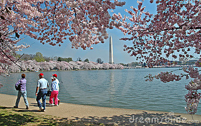 Tidal Basin and Washington Monument with Cherry Blossoms