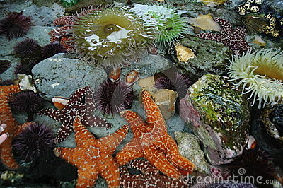 Tide Pool Animals