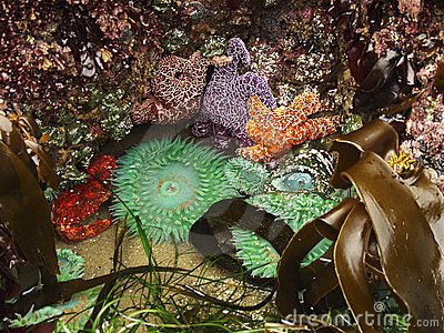 Tide pool ecosystem royalty free stock images image 28139 for Ecosystem pool