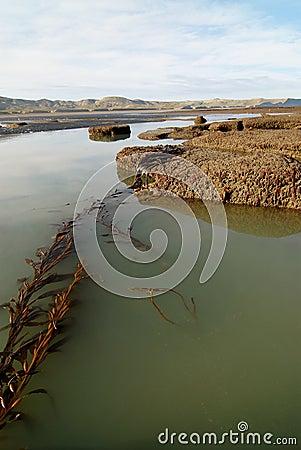 Tide Pools in Patagonia