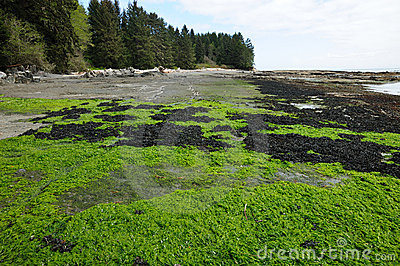 Tide pools and seagrass