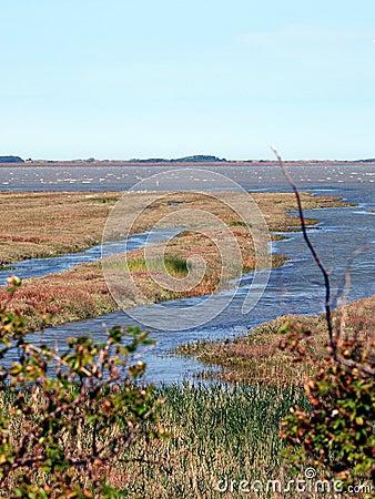 Free Tideland Of The North-Sea-Island Borkum Stock Photo - 12882770
