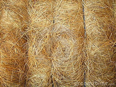 Tied hay bale