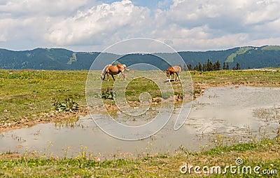 fox auf hügel mit eiche, tieren und natur vektor abbildung - bild, Hause ideen