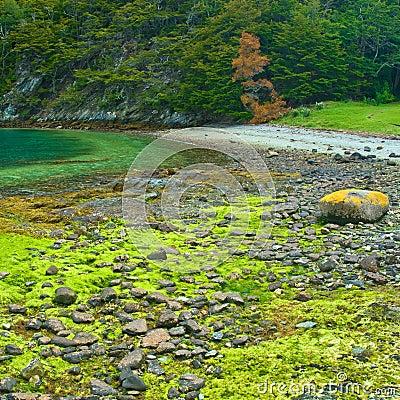 Free Tierra Del Fuego National Park Near Ushuaia, Royalty Free Stock Photo - 4035385