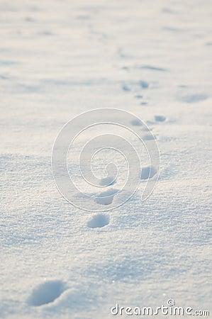 Lizenzfreie Stockbilder: Tierspuren im Schnee
