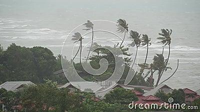 Tifón de Pabuk, orilla de mar del océano, Tailandia Desastre natural, huracán del eyewall Palma extrema fuerte de las oscilacione metrajes