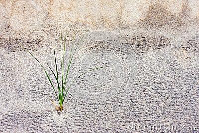Tige d herbe en dune de sable