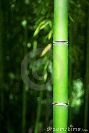 tige en bambou verte photographie stock libre de droits image 5711097. Black Bedroom Furniture Sets. Home Design Ideas
