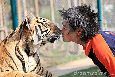Tiger,Chiang Mai, Thailand Editorial Photo