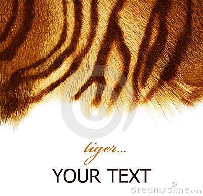 Free Tiger Fur Royalty Free Stock Photo - 12283265