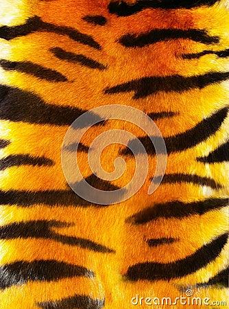 Free Tiger Fur Royalty Free Stock Image - 3905146