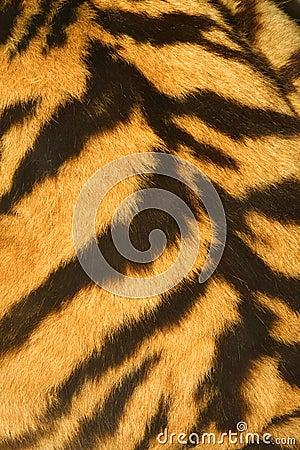 Free Tiger Fur Texture (real) Royalty Free Stock Image - 9604336