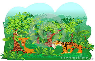 Tiger hunt a deer