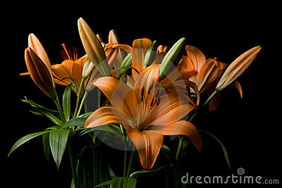 Tiger Lily flower arrangement