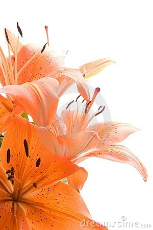 Free Tiger Lily Flowers Stock Photography - 2791162