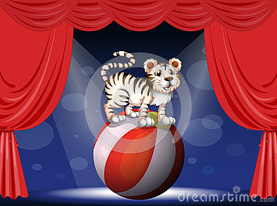 A tiger performing at the circus