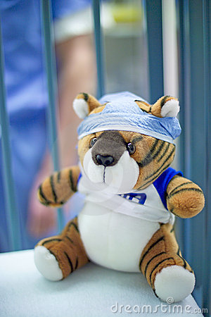 Tiger in surgery