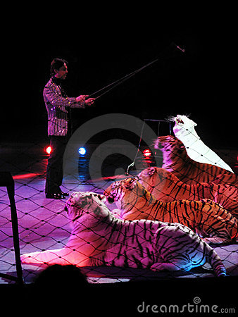 The tiger tamer Editorial Stock Image