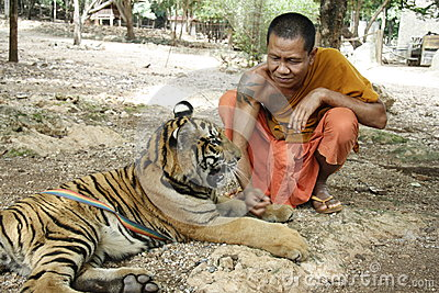 The Tiger Temple Editorial Stock Image
