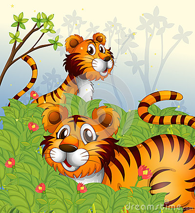 Tigers in the woods