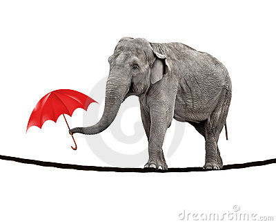 Tightrope walking elephant