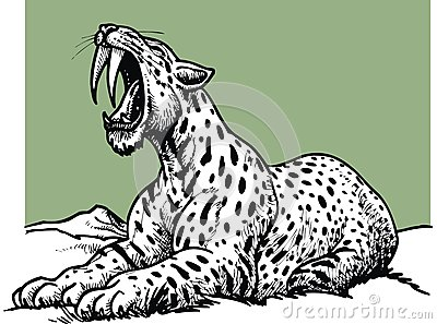 Tigre Dai Denti A Sciabola Da Colorare Stampae Colorare