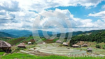 Tijdtijdspanne, wolken die zich over de padievelden bewegen stock video