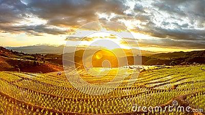 Tijdtijdspanne, zonsondergang over de padievelden stock videobeelden